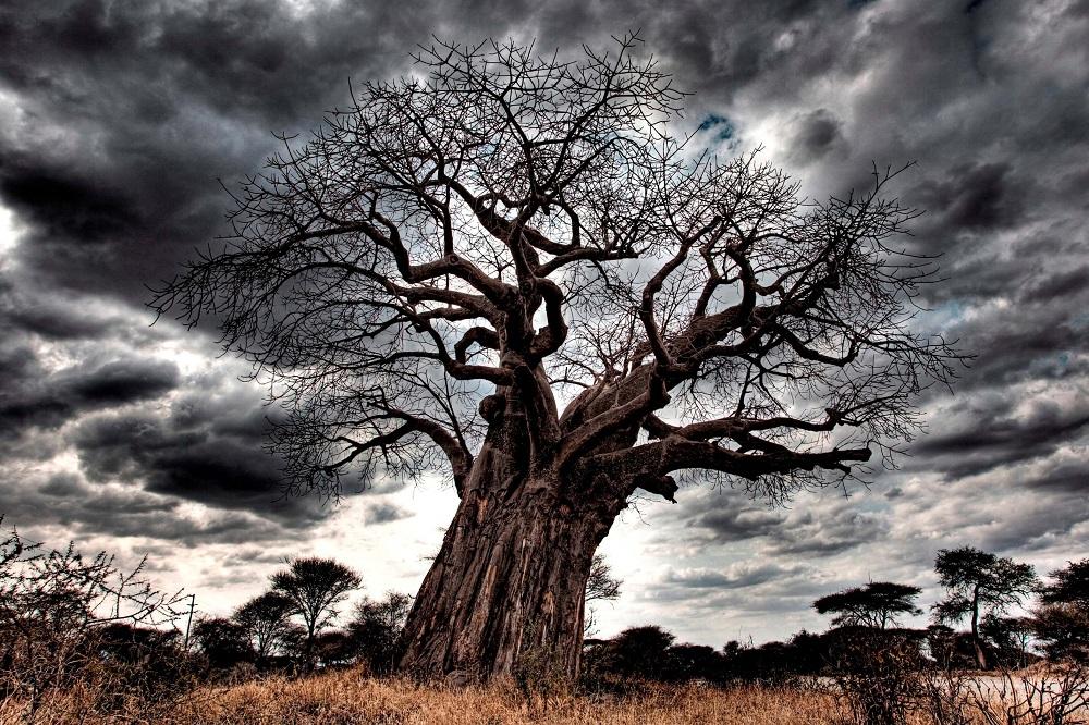 Tansania: die große Migration - Mara