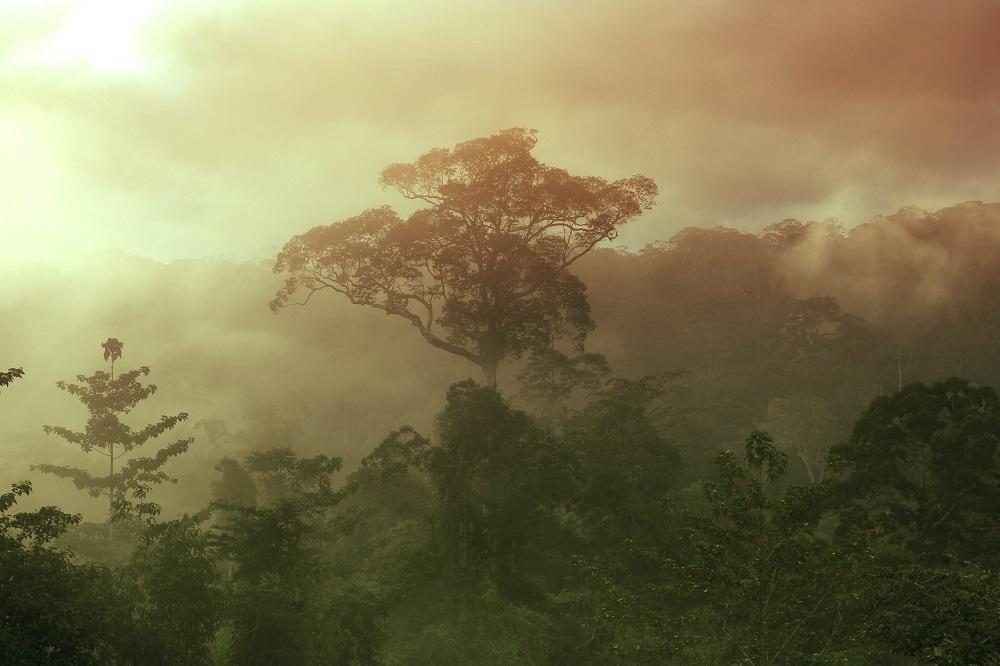Indonesisches und malaysisches Borneo