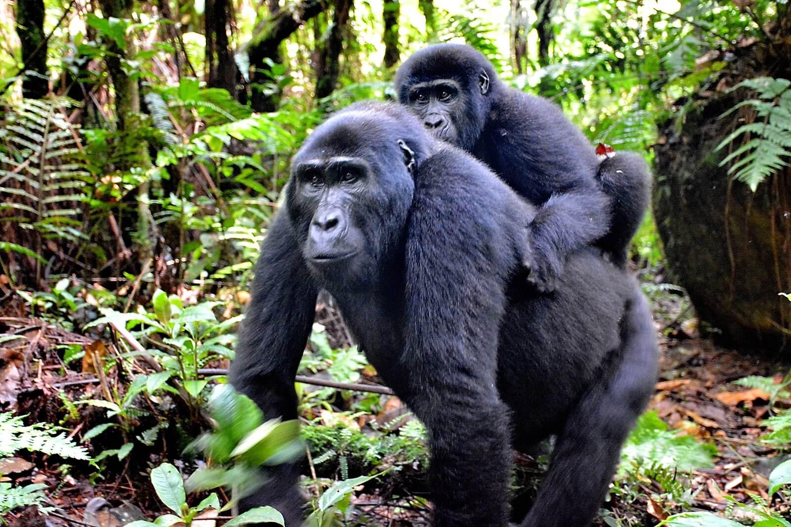 Feedback von Familie Felkl: Uganda-Safari vom 04.06.2018