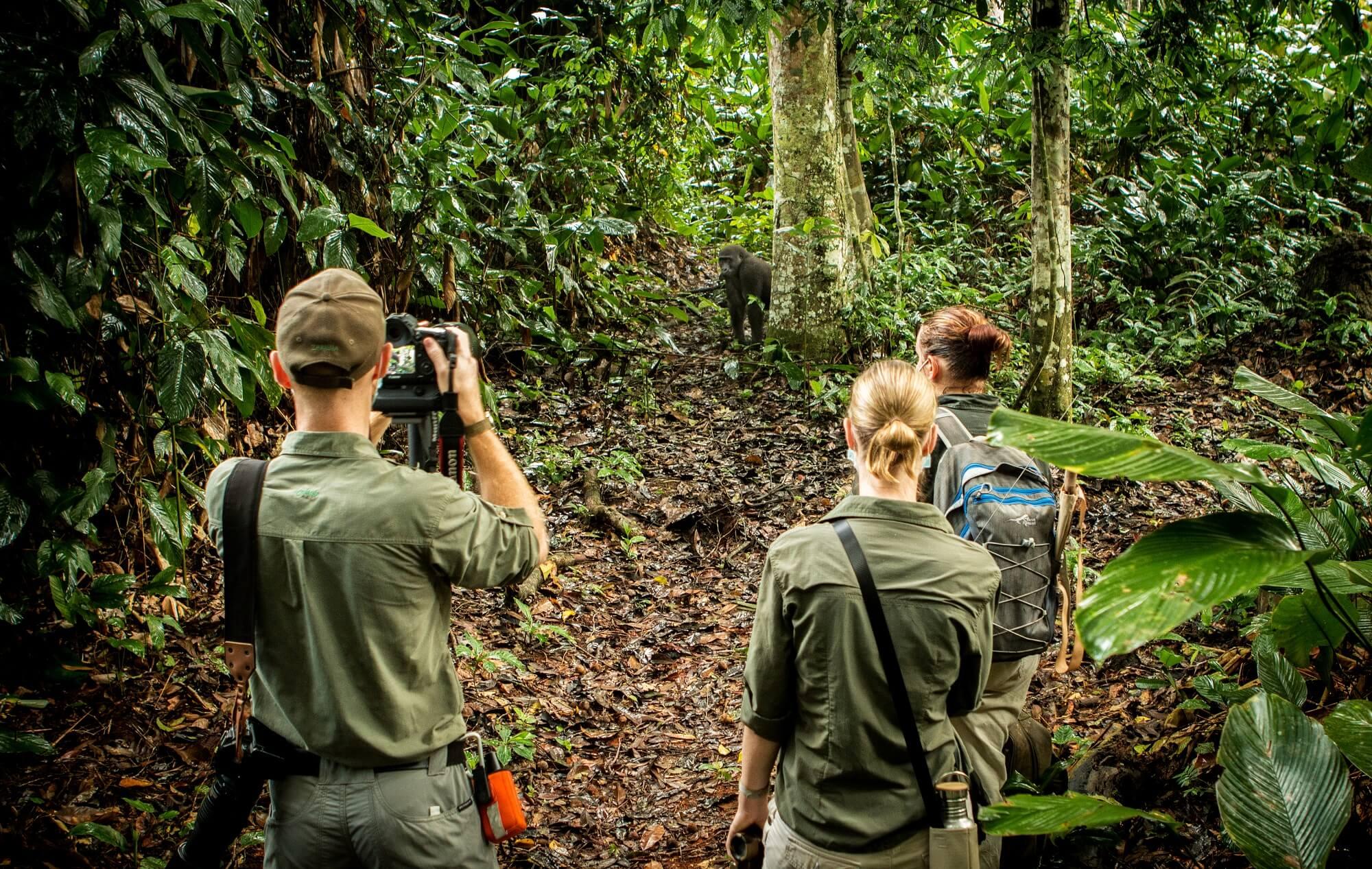 Erhöhung der Gebühren für Gorillapermits ab 01. Juli 2020