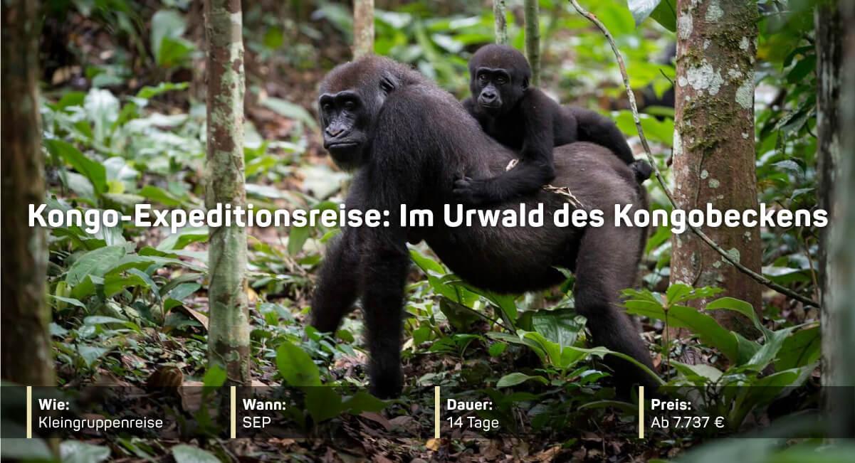 Kongo-Expeditionsreise: Im Urwald des Kongobeckens