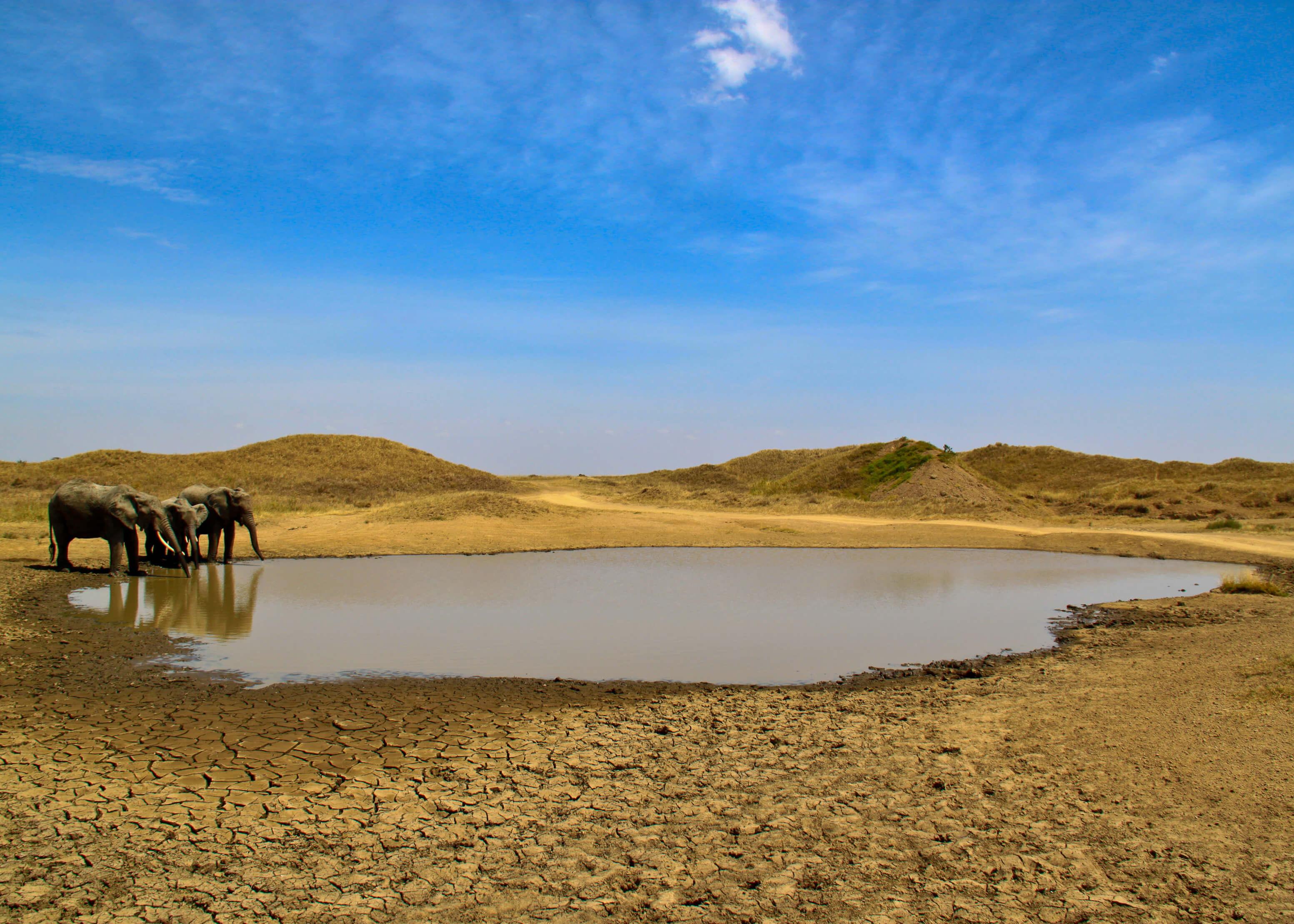 Tansania-Mara-Safari