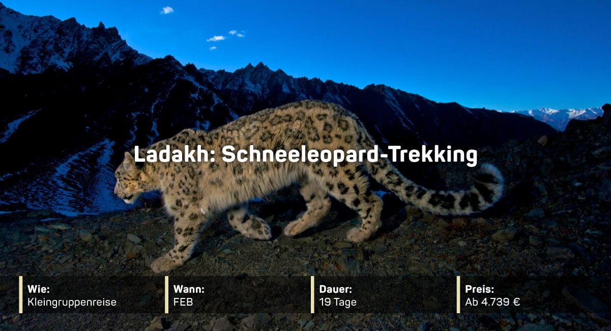 Ladakh: Schneeleopard-Trekking
