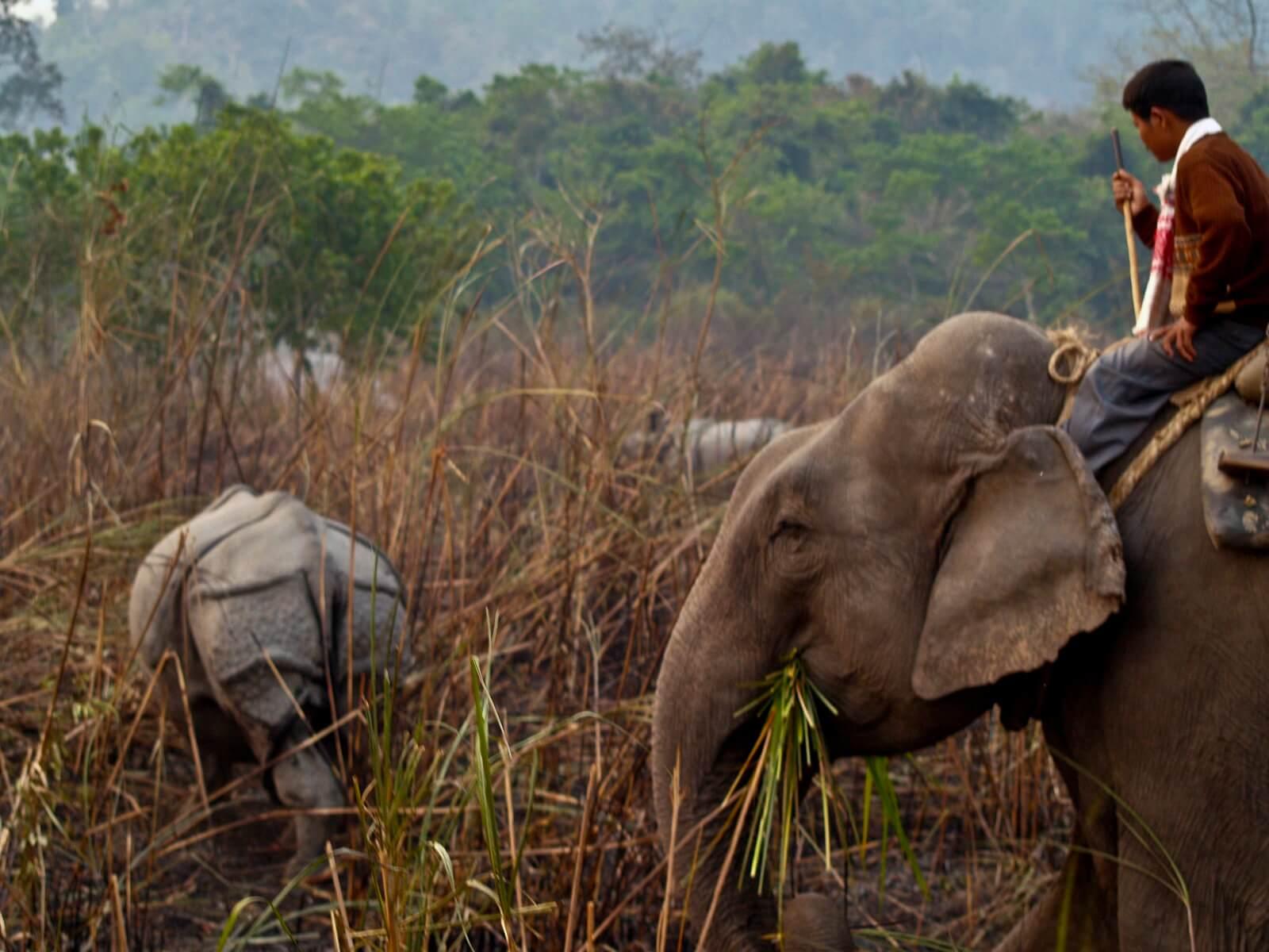 Indien: Tiger und Nashörner