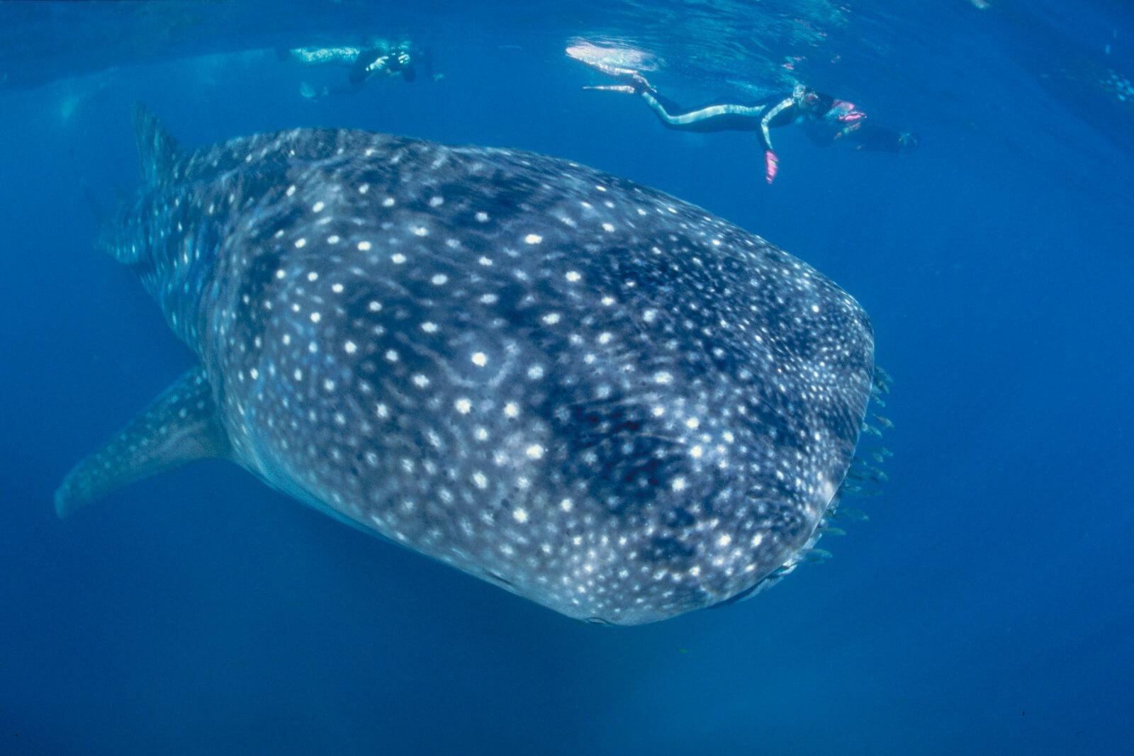 Galapagos unter Wasser