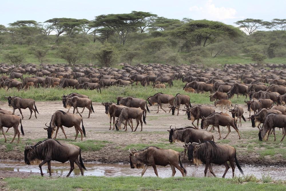 Die Migration zu weit oben: Wir überdenken unsere Strategie für Serengeti-Safaris