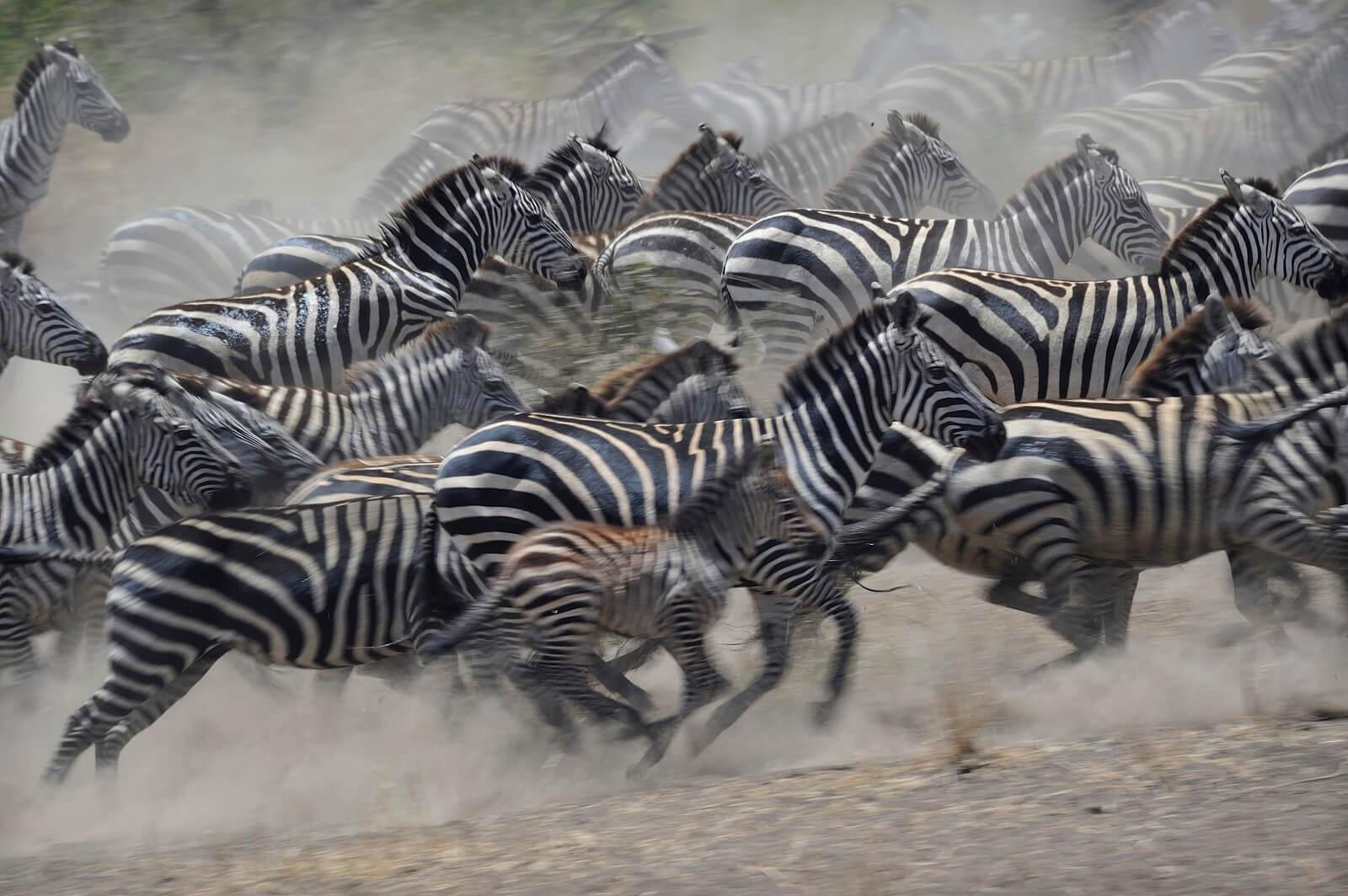 Tansania-Ndutu mit Mafia