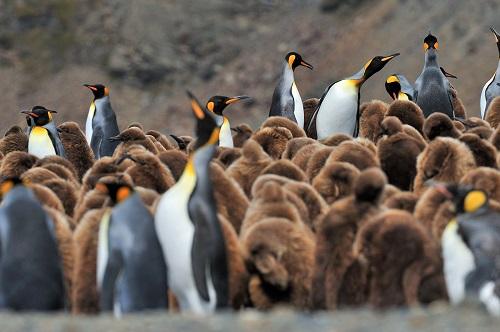 Südgeorgien und Falkland-Inseln