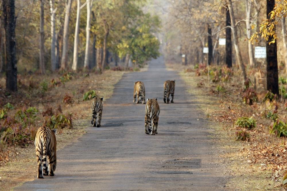 Die Grand-Tour durch Zentralindien