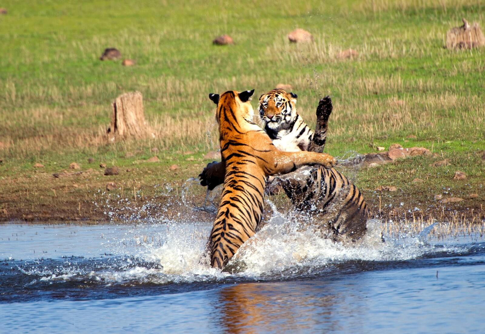 Indien Reich der Tiger