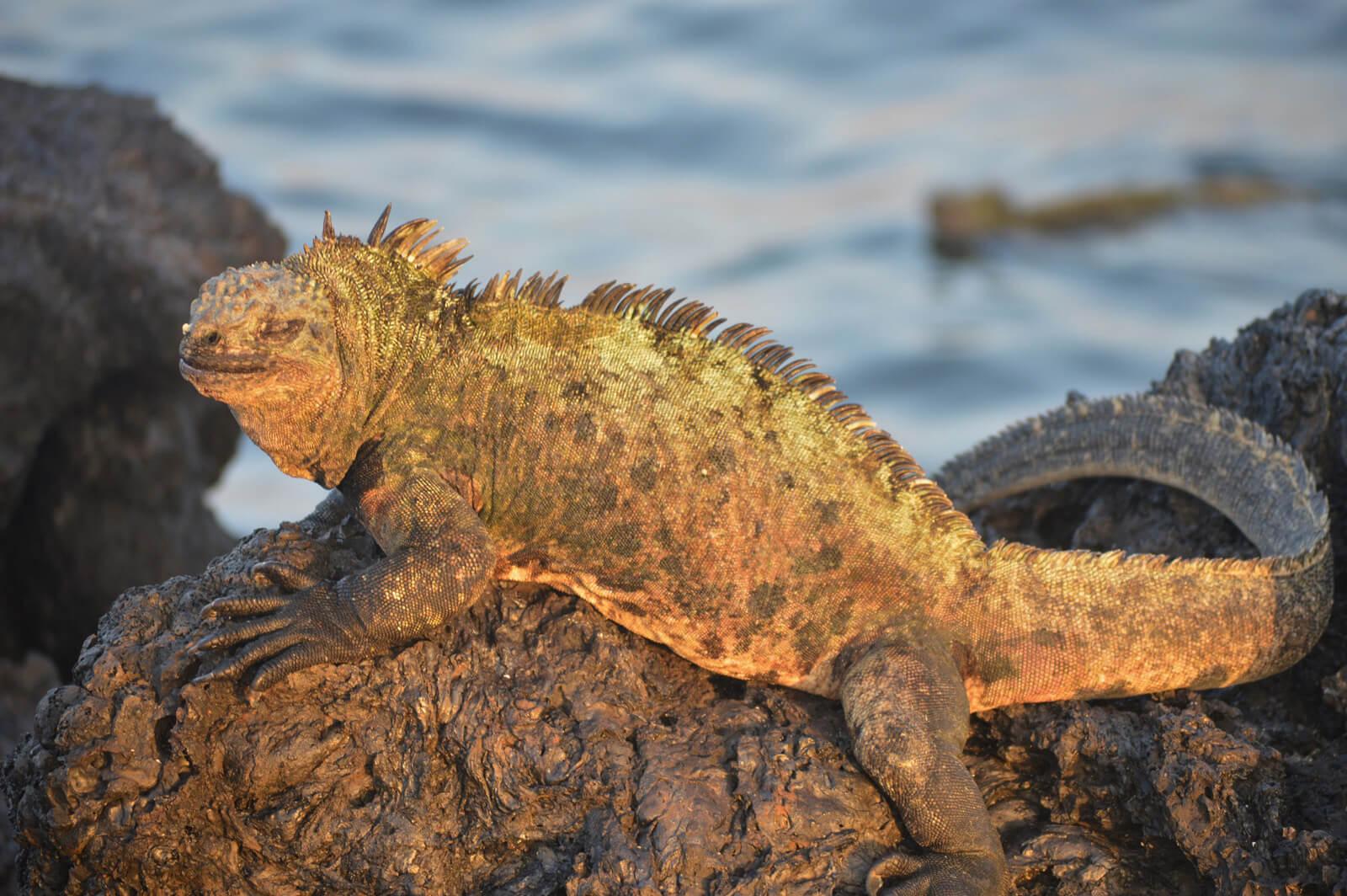 Galapagos-Westen