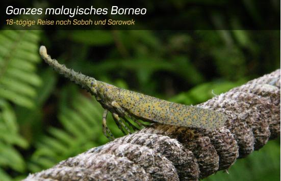 Ganzes malayisches Borneo