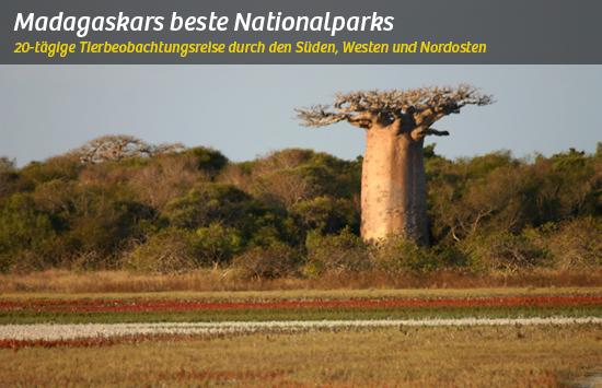 Baobabs und Lemuren auf der Süd- und Westroute