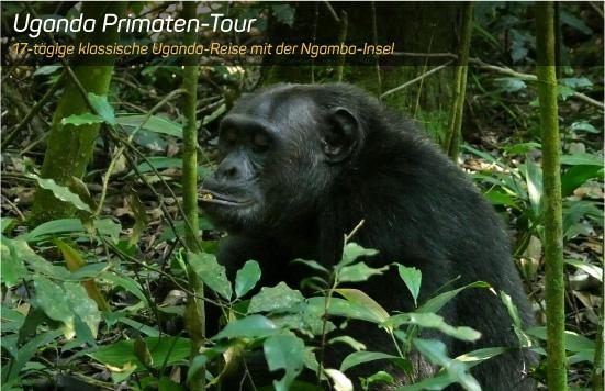 Uganda Primaten-Tour